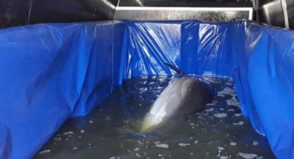 В Крыму издеваются над дельфинами